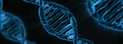 DNA BRCA gene murtations